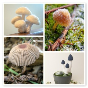 Monday Mood Board Mushrooms
